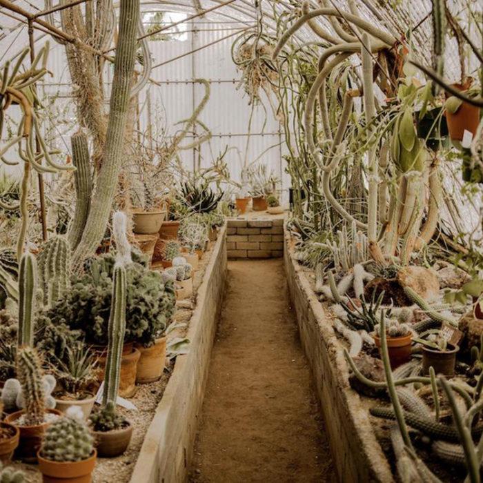 Moorten Botanical Garden cactus