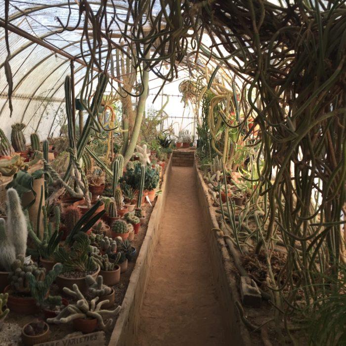 palm springs botanical garden