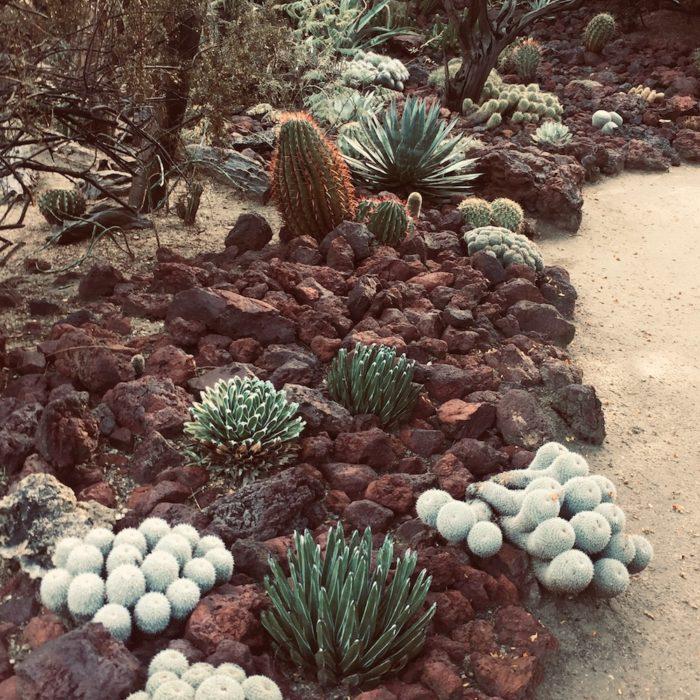 botanical garden palm springs