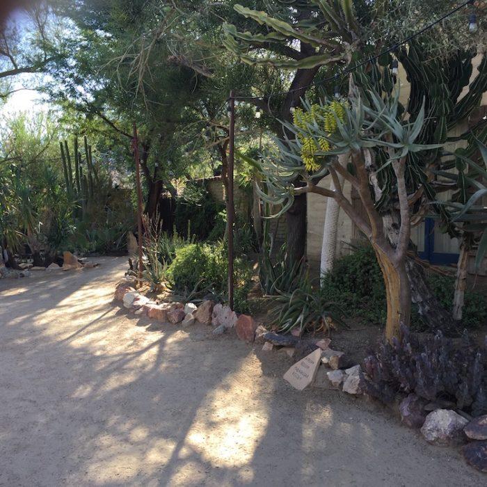cactus garden in palm springs