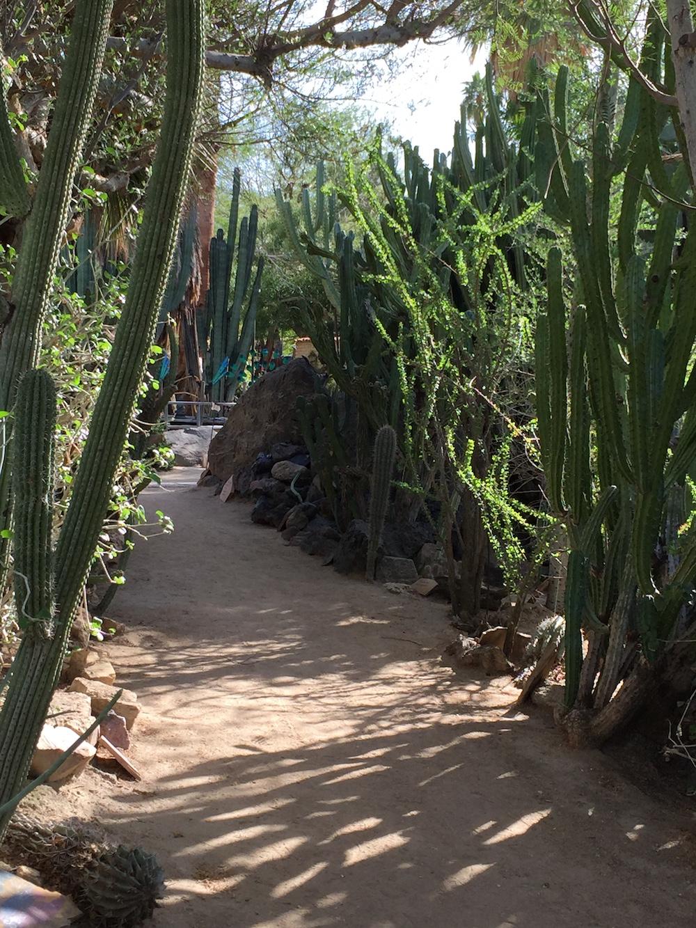 Etonnant Moorten Botanical Garden | Palm Springs, California