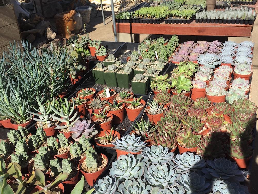 Moorten Botanical Garden nursery